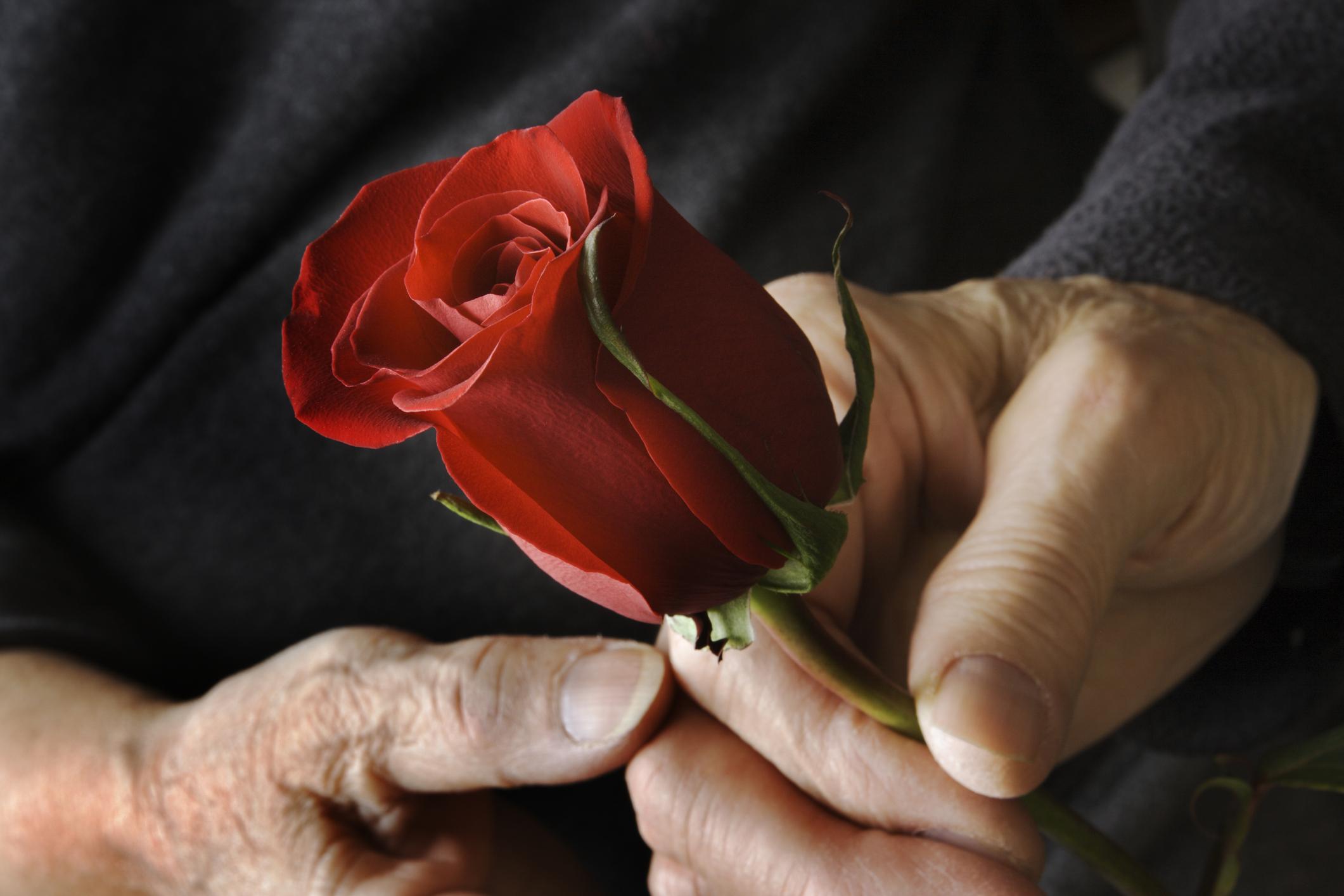 Préparer un enterrement choisir les fleurs - Odella.fr