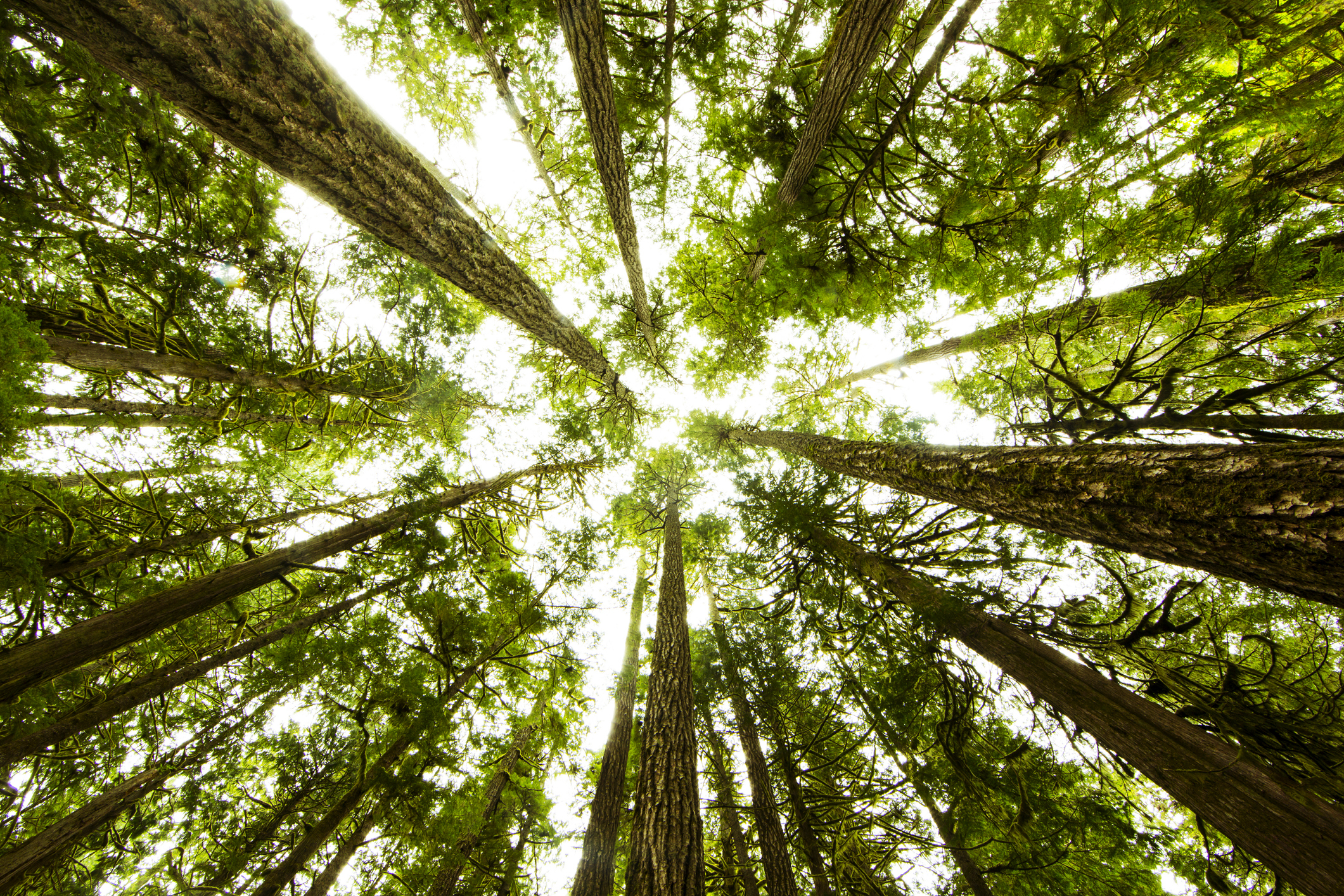 Le cercueil écologique, un choix d'avenir