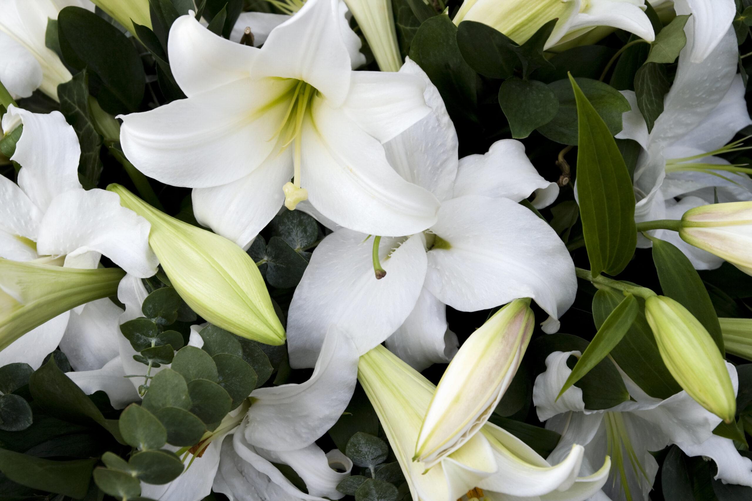 Longue maladie faciliter la préparation de ses propres obsèques - Odella.fr