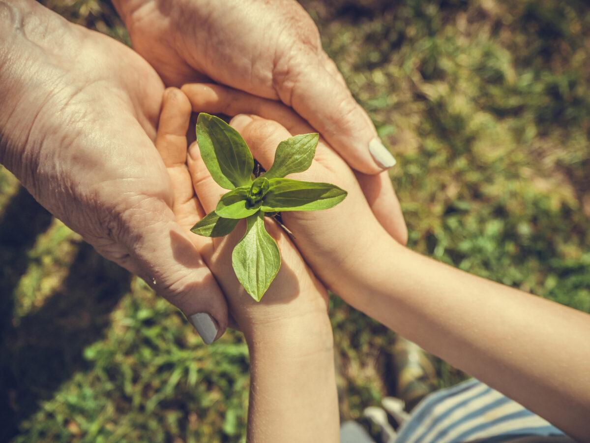 Ces sociétés plantent un arbre pour chaque défunt - Odella.fr
